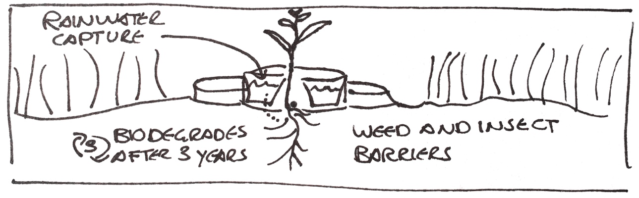 Biodegradable planter with rainwater capture and weed and insect barrier