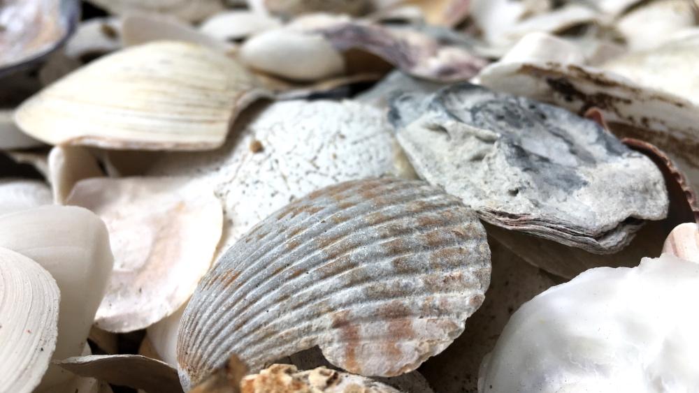 Can Artificial Shells Reduce CarbonDioxide?