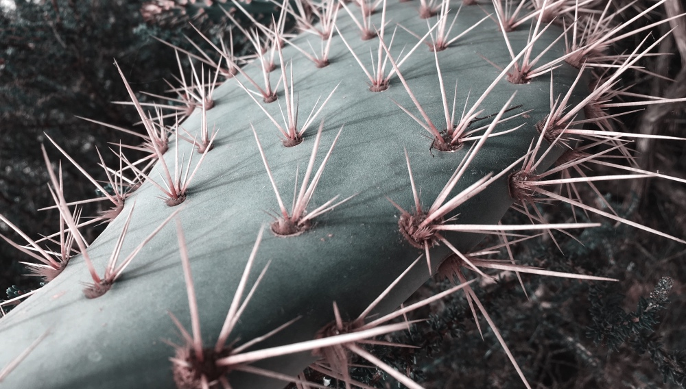 Can Cactus Reduce Global Warming?